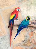 Two parrots. Royalty Free Stock Photos