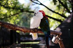 Two parrots are sitting on a branch in the zoo stock photo