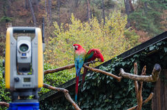 Two parrots. Watching Geodetic works at the zoo Royalty Free Stock Photos
