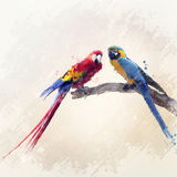 Two Parrots Watercolor Royalty Free Stock Image