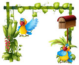Two parrots with a wooden mailbox Stock Photo