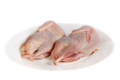 Two partridge fresh birds Royalty Free Stock Photo
