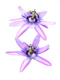Two passion flowers Royalty Free Stock Photos