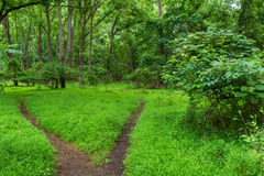 Two Path Woodlands Stock Image