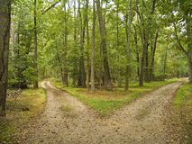 Two Paths. In this Central New Jersey woodlands Royalty Free Stock Photography