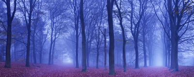 Two paths in a dark and foggy forest, The Netherlands Stock Images