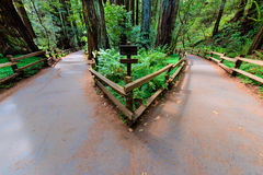 Two paths lead to different directions Royalty Free Stock Photography
