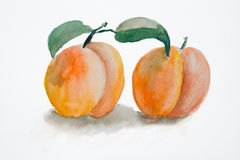 Two peach. Watercolor illustration of Two peach Stock Photo