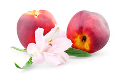 Two peaches and alstroemeria Royalty Free Stock Photo