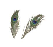 Two Peacock Feathers Royalty Free Stock Photography
