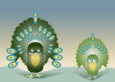 Two Peacocks. A Hand drawn Illustration of two stylized green colored peacocks with ornate feather decoration. One an adult the other a juvenile, set on a Royalty Free Stock Images