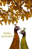 Two peacocks painted in fall colors on a white background. Autumn concept. royalty free stock photo