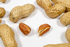 Two peanut grains surrounded by other ones in shell Royalty Free Stock Images