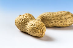Two peanuts shelled Stock Image