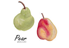 two pear red and green .Hand drawn watercolor painting on white background.Vector illustration Stock Photos