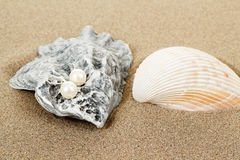 Two pearl earrings and shells on sand Royalty Free Stock Photography
