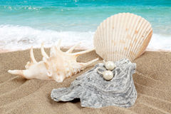 Two pearl earrings and shells on sand Stock Image