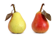 Two pears with leaf  Stock Photo