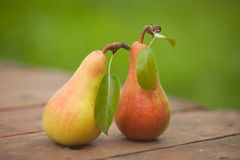 Two pears with leaves Royalty Free Stock Photos
