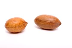 Two pecan nuts Royalty Free Stock Photo