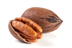 Two pecan nuts isolated on white background Stock Photos