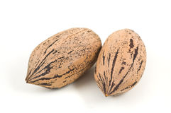 Two pecan nuts on white background. Stock Images