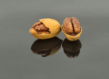 Two Pecans. On the gray specular  background Stock Images