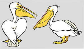 Two Pelicans. Illustration of two white pelicans Stock Images