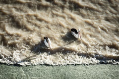 Two pelicans wait for fish near a weir in outback Australia shot from above in the late afternoon with stretching shadows at Lake Stock Photos
