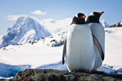 Two Penguins Stock Photography