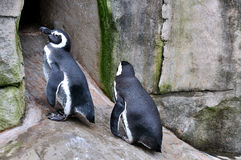 Two penguins Royalty Free Stock Photos