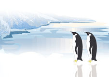 Two Penguins Stock Images