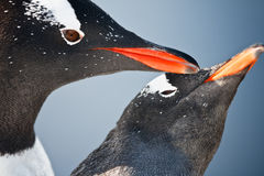 Two penguins  in Antarctica Stock Photography