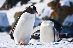 Two penguins  in Antarctica Royalty Free Stock Photography