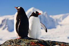 Two penguins dreaming Royalty Free Stock Photo