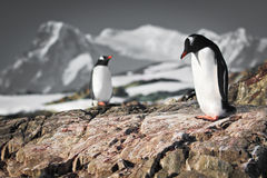 Two penguins dreaming Stock Image