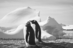 Two penguins dreaming Stock Photography