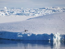 Two penguins on floating ice sheet Stock Photos