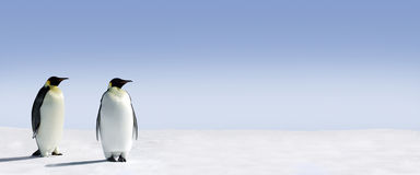 Two penguins panorama Royalty Free Stock Image