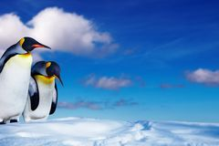 Two penguins in the snow Stock Image