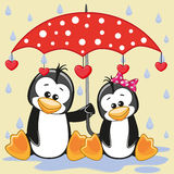 Two Penguins with umbrella Royalty Free Stock Photography