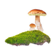 Two penny buns in green moss on white Stock Photography
