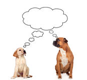 Two pensive dogs Royalty Free Stock Images