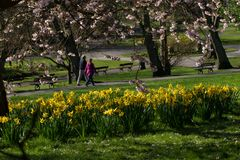 Two people enjoying a stroll through a park in springtime. royalty free stock photography