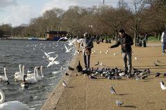 Feeding the birds in Hyde Park,London,UK. Two people feeding the birds by the Serpentine in Hyde Park,London Stock Photo