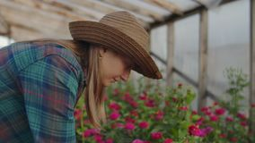 Two people a man and a woman with a tablet computer inspect flowers in a greenhouse on a rose plantation. Close - up of stock footage