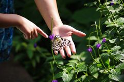 Two people pointing at a butterfly. A mother and daughter pointing at a butterfly Royalty Free Stock Images