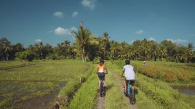 Two people riding bicycles between rice fields. Man and woman in helmets riding bicycles on small road between rice fields near palm trees on sunny summer day stock footage