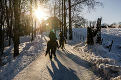 Two people riding horse in group nearby a farm in Oslo Norway. Low sun in winter. Scandinavia Royalty Free Stock Images
