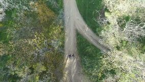 People are fleeing. View from above. Two people are running along a pine grove. View from above. Flight of a drone stock footage